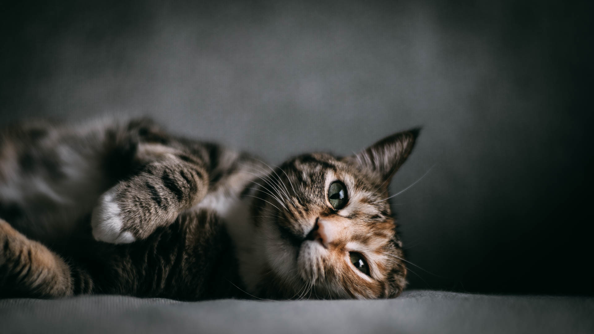 Cat Photography|Contax Carl Zeiss Planar 85mm f/1.4